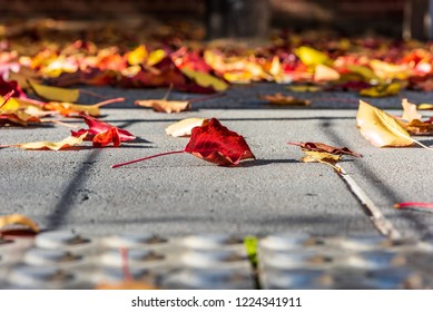 Fallen autumn leaves on a concrete pathway in a shallow depth of field