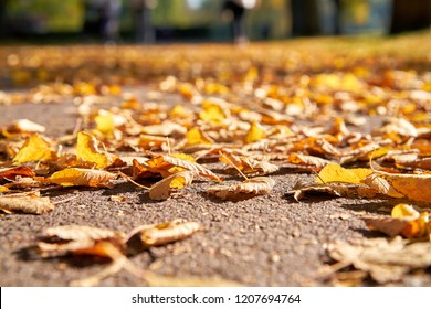 Fallen autumn leaves on a footpath in October