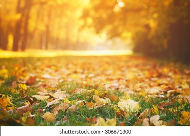 fallen autumn leaves on grass in sunny morning light, toned photo