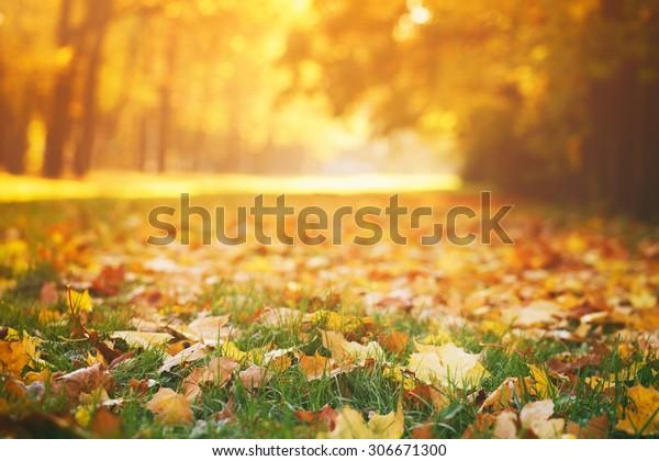 gevallen herfstbladeren op gras in zonnig ochtendlicht, afgezwakt foto