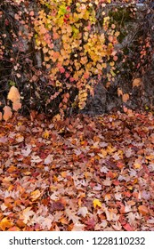 Fallen Autumn Leaves on the Ground and Colorful Leaves on a Stone Wall.