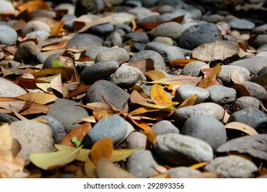 Fallen autumn leaves on river rock covered pathway.
