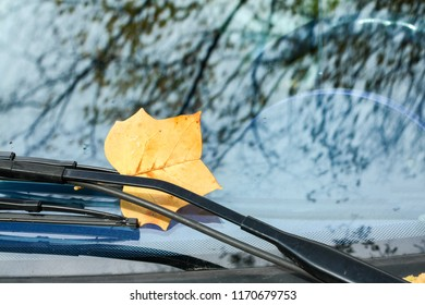 Fallen autumn leaves on the windshield of a car on a raining day