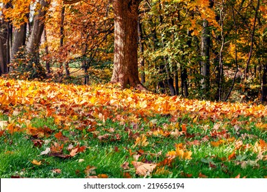 Fallen autumn leaves in the park