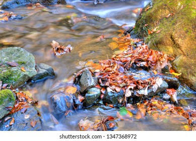 Fallen autumn leaves swimming in cold stream in the middle of rocks.