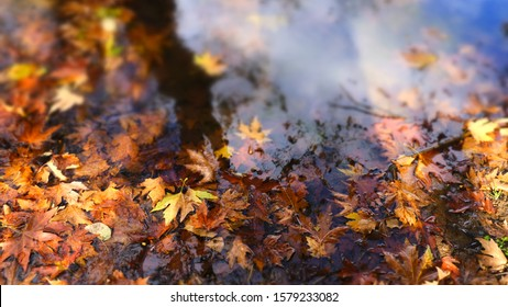 Fallen autumn leaves in the water.