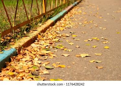 Fallen autumn leaves in the yard. A lot of yellow dry fallen autumn leaves along the curbs. Autumn fallen leaves on a city sidewalk.