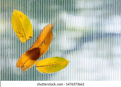 fallen autumnal leaves on glass roof of garden hothouse. blurred background. view through glass roof