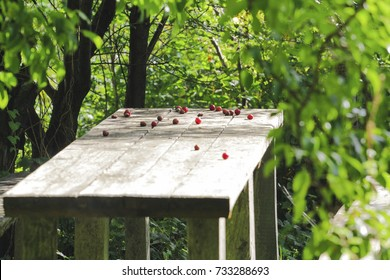 fallen berries on a wooden table under the trees