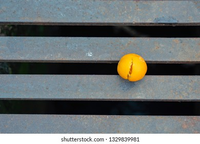 Fallen Bitter Orange