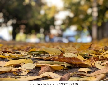 fallen colorful yellow autumn leaves background
