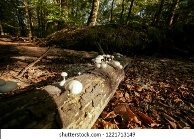 Fallen dead tree trunk with striking atmospheric sunlight in an autumn forest. Slimy white fungi take over lumberjack tree