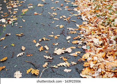 Fallen dried brown leaves scattered on a tarmac road.