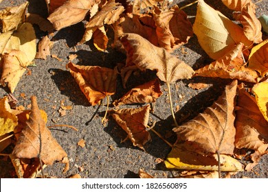 Fallen dried orange and yellow leaves cover on a grey asphalt sidewalk.