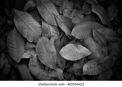 Fallen dry leaves in the park