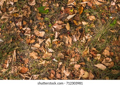Fallen dry leaves and wild apples in the park in autumn