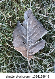Fallen leaf covered in frost on a winter morning