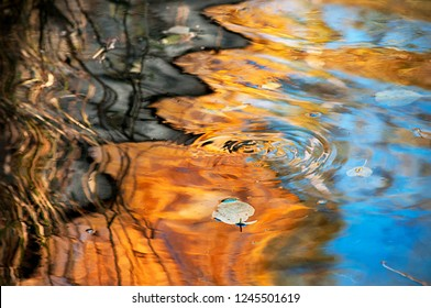 A fallen leaf is floating on the water on  background of  reflection an orange autumn foliage on the surface of the lake