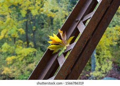 Fallen leaf on rustic bridge in Washington