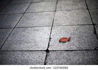 a fallen leaf on the street