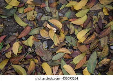 The fallen leave on the ground.