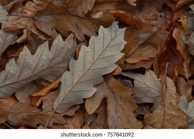 Fallen leaves in Autumn, abstract Art