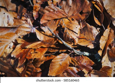Fallen Leaves in Autumn / Fall lying chaotically on the ground.