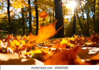 fallen leaves in autumn forest at sunny weather