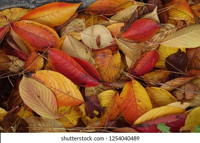fallen leaves, autumnal tints
