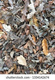 Fallen leaves covered in frost