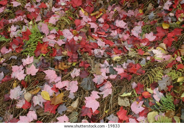Fallen Leaves Covering Forest Floor