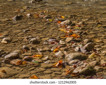 fallen leaves of the hornbeam lie in the shallow waters of a mountain river