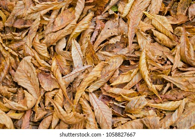 Fallen leaves lying on the ground in Autumn