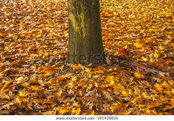 Fallen leaves on the feet of the tree