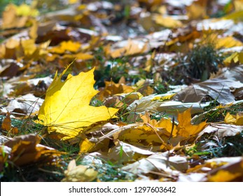 fallen leaves on the grass in the autumn sun