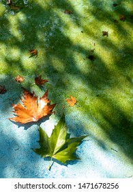 Fallen leaves on a green and blue background