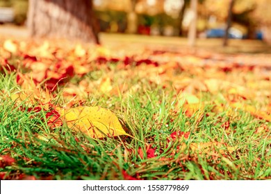 Fallen leaves on ground in autumn park