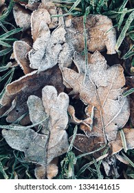 Fallen leaves on the ground covered in frost