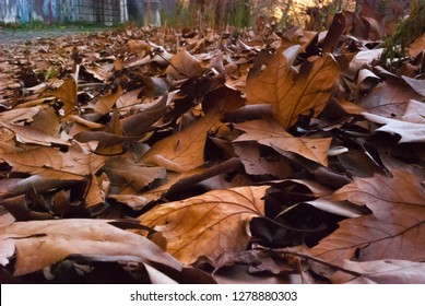 Fallen leaves on the road