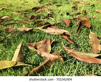 Fallen leaves on a sunny day.