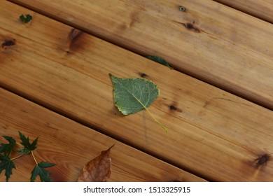 Fallen Leaves on Wet Deck