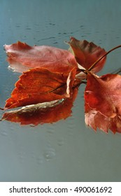 Fallen leaves on the wet surface and their reflection