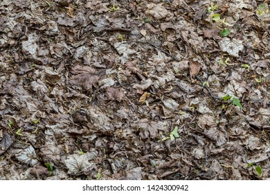 Fallen leaves in spring. Texture of dry leaves. Natural texture of fallen leaves.