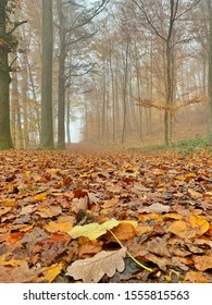 Fallen leaves and tall trees in autumn season