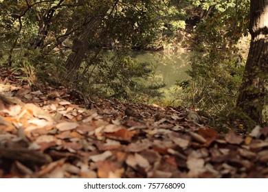 fallen leaves in winter