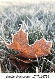 a fallen maple leaf covered in frost