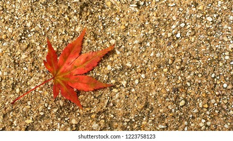 A fallen maple leave on the sand during Atrium season in a public park of Japan. It is the time when the colour of the leave has changed into a beautiful reddish orange colour.