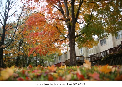 Fallen Multi-Colored Leaves from a Tree Adorn the Grass Up Close Out of Focus in the Foreground with Townhouses in the Background in Burke, Virginia