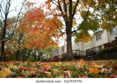 Fallen Multi-Colored Leaves from a Tree Adorn the Grass Up Close in the Foreground with Townhouses Out of Focus in the Background in Burke, Virginia