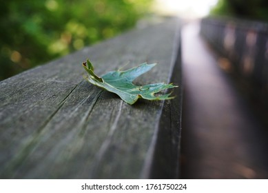 A fallen oak leaf on an old shabby wooden handrail of a footbridge against the backdrop of a sunlit path. City Park Holland, Michigan, USA